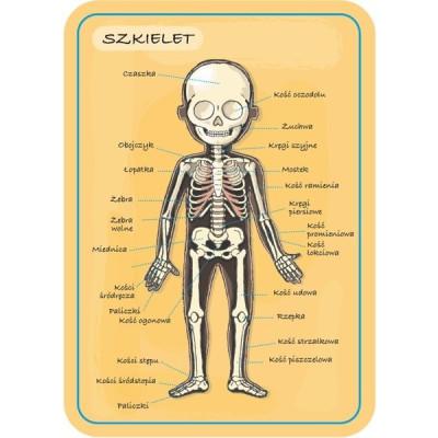 Lalka Barbie Fashionistas GHW50