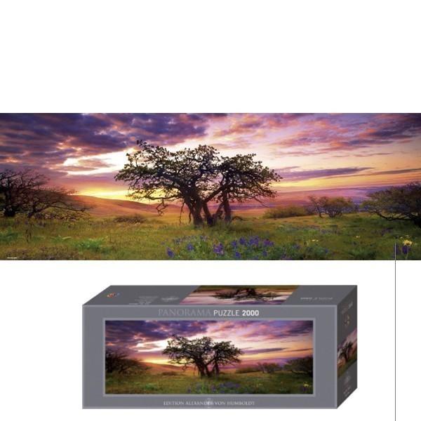 Gra Han Solo Card Game