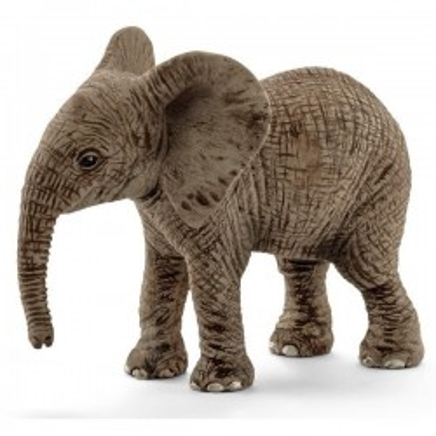 Młody słoń afrykański