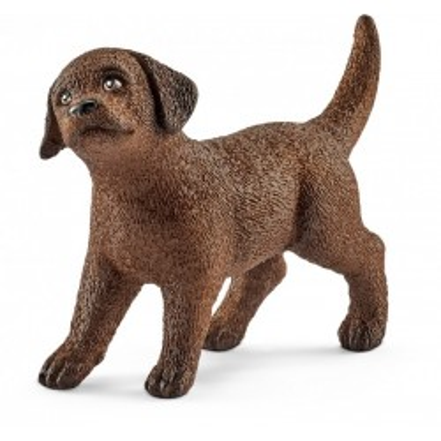 Labrador Retriever Szczeniak